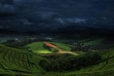 K - Tea Plantation Honde Valley Zimbabwe