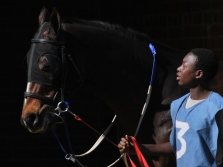 Borrowdale race horse